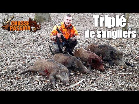Chasse Sanglier - Triplé De Sangliers !