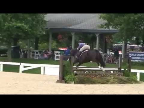 Four Seasons (For Sale) - 2nd place Adult Amateur Hunters (SOLD)
