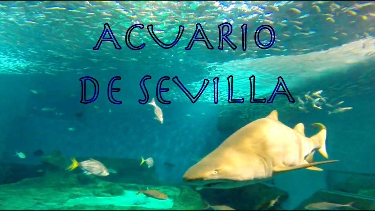 Acuario de sevilla hd youtube - Entradas acuario sevilla ...
