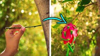 31種自己種植水果的簡單方法