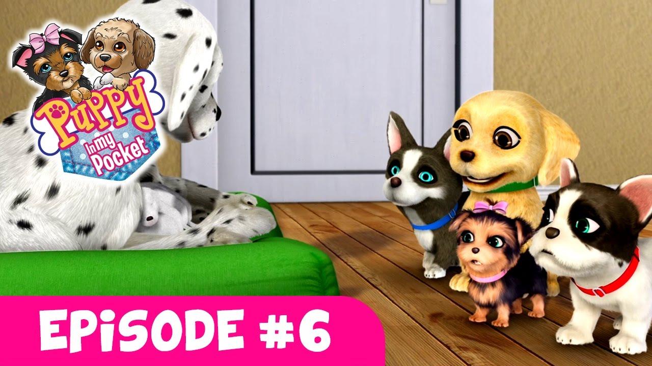 Puppy In My Pocket Webisode 6 Newborn Puppies Youtube