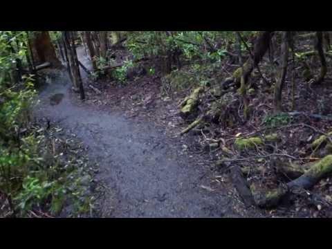 Huon Valley Tahune rainforest walk p2