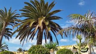 SBH Monika Beach Costa Calma 01.2017