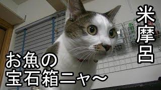 家の猫も昔はシュッとしてたんですよ・・・。