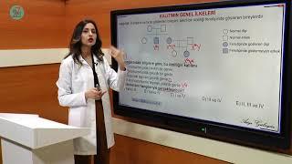 7/24 Eğitim - Biyoloji 10.sınıf Soru Çözümü