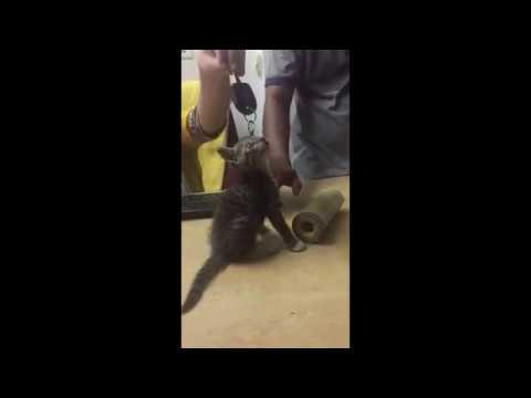 Cute Little funny Cat Vine