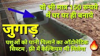 पशुओं के लिये पानी पीने का देसी जुगाड़। Dairy Farming। Automatic water drinking system