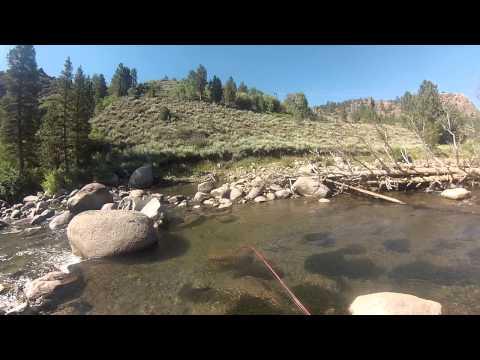High Sierra Fishing-West Walker
