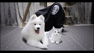 가오나시를 보고 난리난 강아지와 고양이!!