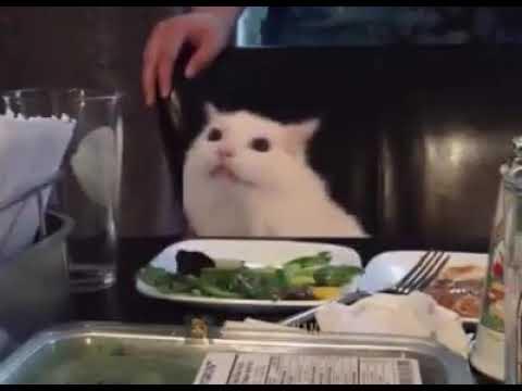 Meme Del Gato En La Mesa En Video Uwu Youtube
