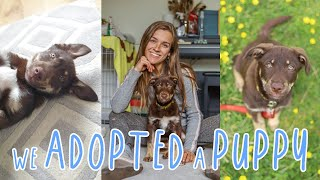 OUR ADOPTION STORY   Adopting a Romanian Rescue through The Pack Project   Meet Tia