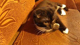 Без кота и жизнь не та🐱Гость в нашем доме.
