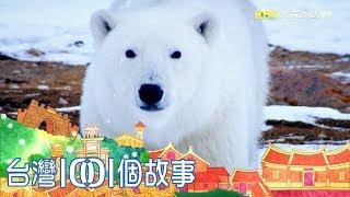 海冰流失棲地縮減 北極熊世紀末滅絕危機 part1 台灣1001個故事