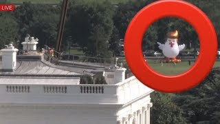 Massive Inflatable Trump Chicken with President Donald Trump-Like Hair Outside The White House 2017 Video