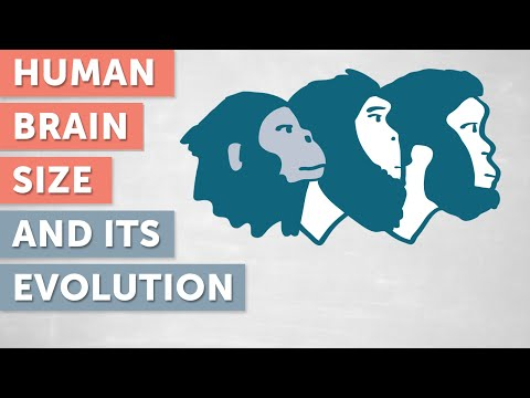 The Evolution of the Size of the Human Brain | WIELAND HUTTNER