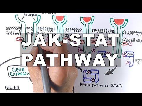 JAK-STAT Signalling Pathway