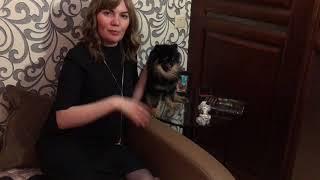 Покупка собаки на avito: ожидание и реальность