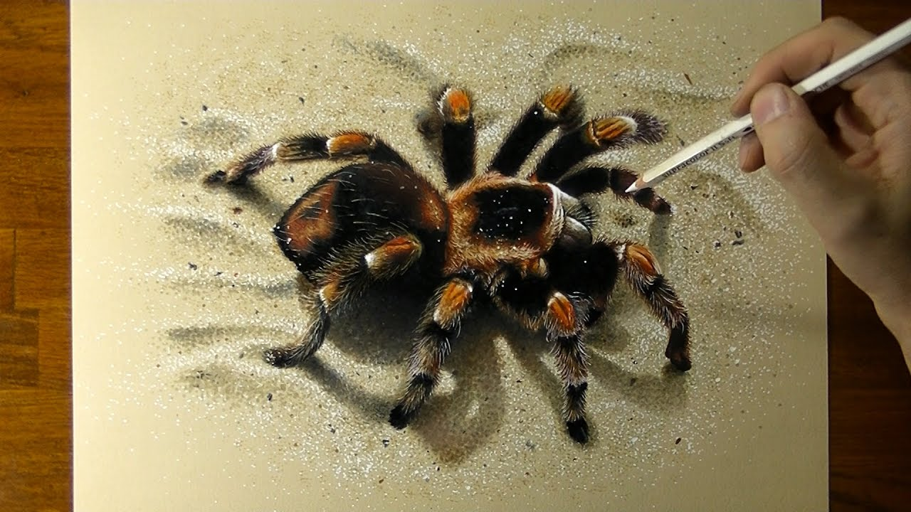 Drawing 3d Spider How To Draw 3d Art
