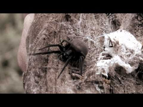 Operation Spider, Citizen Science - University of South Aust
