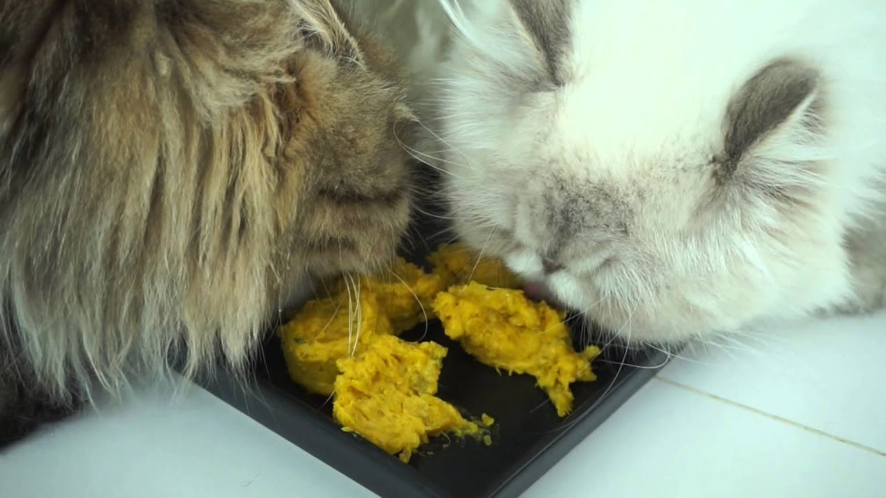 Homemade Cat Food Recipes To Gain Weight