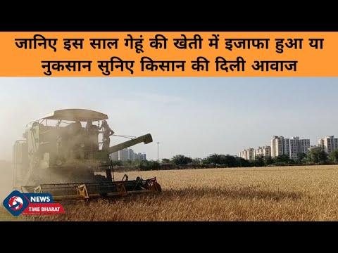 जानिए इस साल गेहूं की खेती में इजाफा हुआ या नुकसान सुनिए किसान की दिली आवाज || News Time Bharat