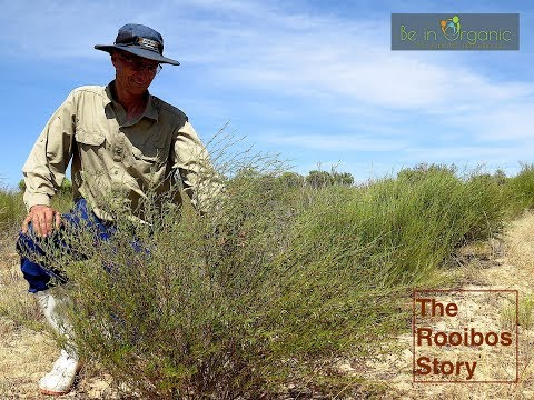 The Rooibos Story