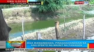 BP: Pating na napadpad sa baybayin sa Camarines Sur, nagluwal ng 28 pups bago namatay