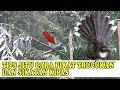Jebakan Termudah Khusus Burung Trucukan Dan Sikatan Kipas  Mp3 - Mp4 Download