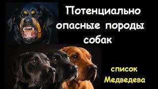 Медведев Д.: список потенциально ОПАСНЫХ пород собак
