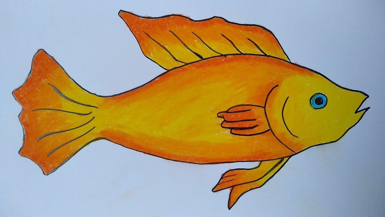 Cara Menggambar Ikan Yang Mudah Menggambar Ikan Mas Youtube