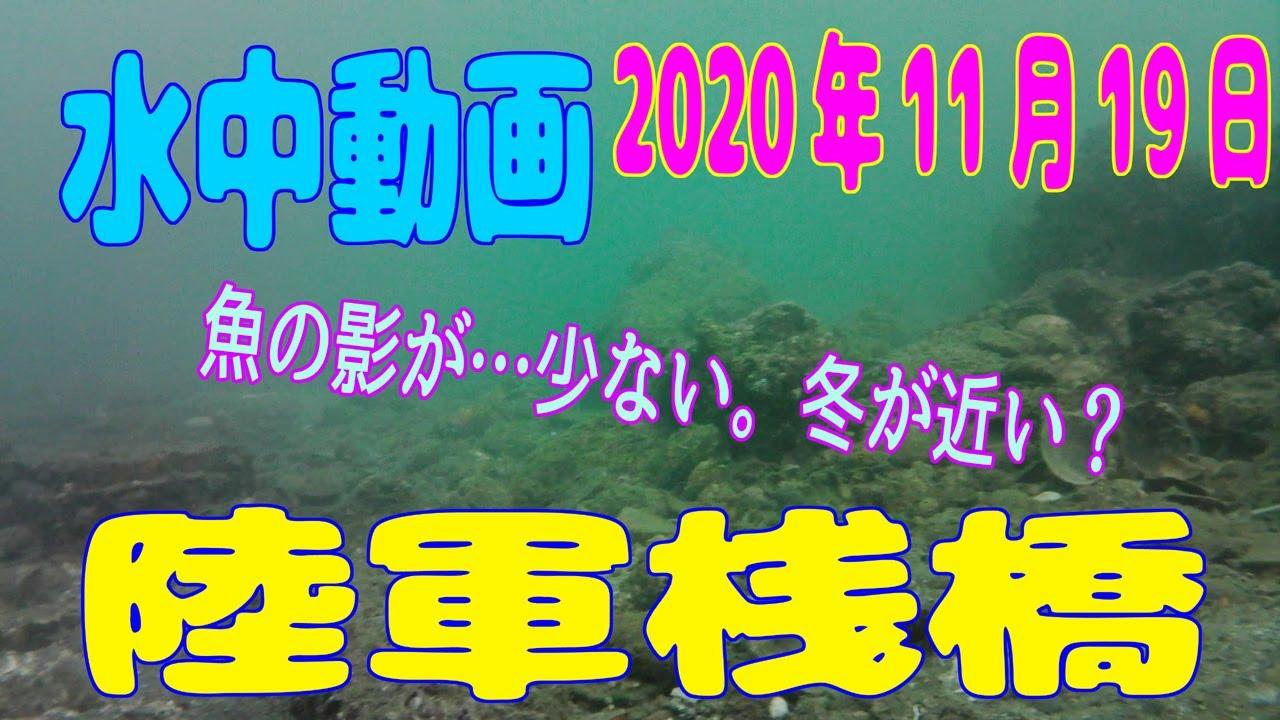 水中動画(2020年11月19日)in 陸軍桟橋