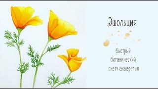 Эшольция. Ботанический скетч акварелью. Быстро и легко рисуем желтые цветы