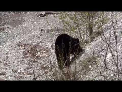 Erlebe Kanada - Teil 3 (2010)