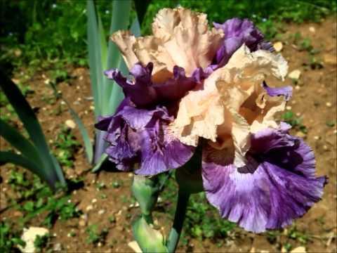 Firenze giardino dell 39 iris youtube - Giardino dell iris firenze ...