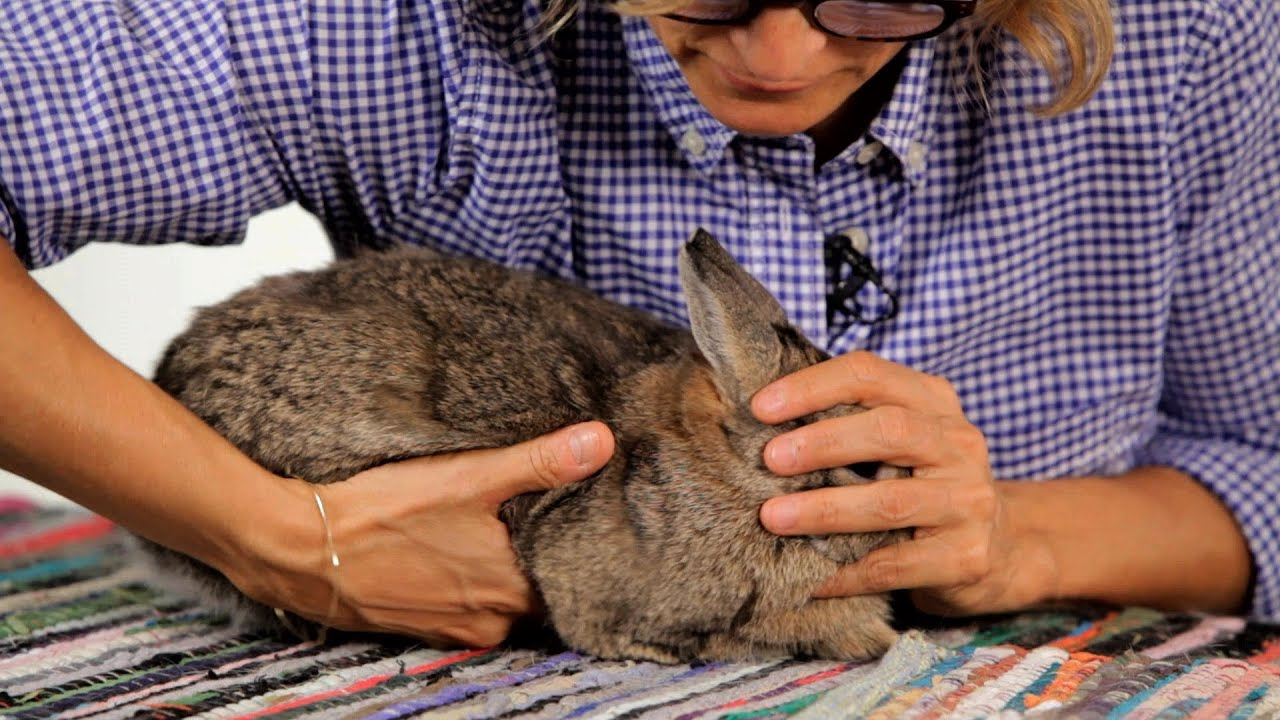How to Handle a Pet Rabbit | Pet Rabbits - YouTube