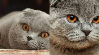 8 different types of cat breeds | Learn via Nature