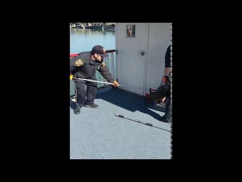 Bobcat Caught on Boat || ViralHog