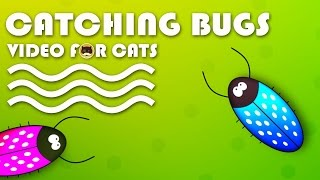 ENTERTAINMENT VIDEO FOR CATS. Cat Games - Catching Bugs.