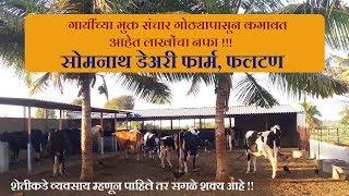 Somnath Dairy Farm | आदर्श मुक्त संचार गोठा | फलटण | गोविंद डेअरी