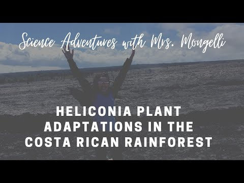 Heliconia plant adaptations in the Costa Rican rainforest - YouTube