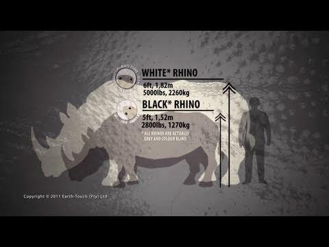 Countdown to rhino extinction?