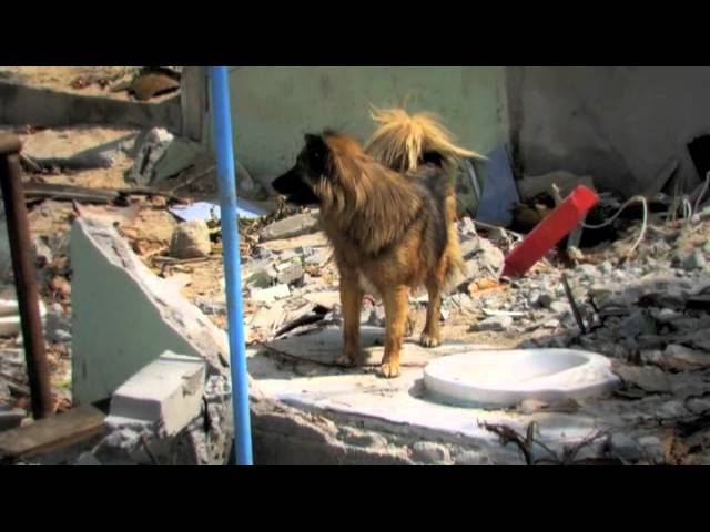 Soi Dog The Movie Travel Video