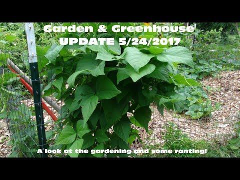 ⟹ GREENHOUSE AND GARDEN UPDATE 5/24/2017 #GARDEN