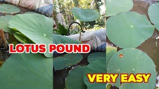 Making Lotus Pond Using Flower Pot Very Easy In 10 Minutes
