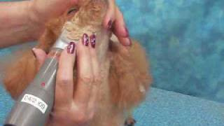 Clipping The Poodle Face