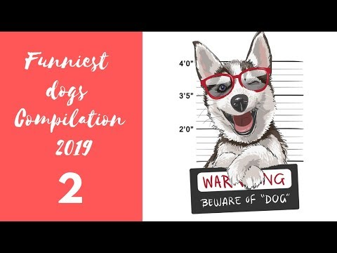 Funniest dogs Compilation 2019 - ultimate funny dog compilation | cute pets 2019