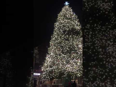 """Christmas at Boston 🌟🌟""""Center of Arabic Culture"""";""""American Culture& ALl WOrld Culture🌟Alleluiaaa"""""""
