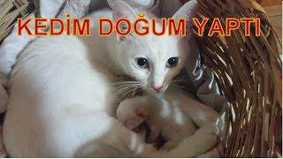 Kedim Doğurdu 😙 Kedi Bebeklerimiz Var 😍😙