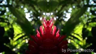 Sumire - Summertime Poppin'