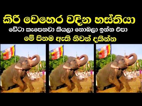 කිරි වෙහෙර වදින පින්වත් හස්තියා | Ape Pansala | Tv Nine Sri Lanka